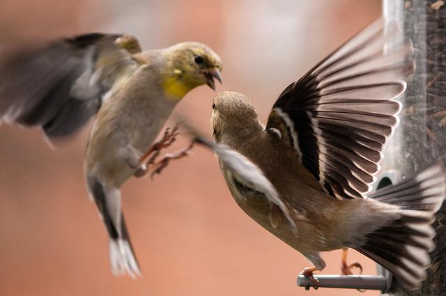 birds by Nathan Siemers en Entusiasmado.com