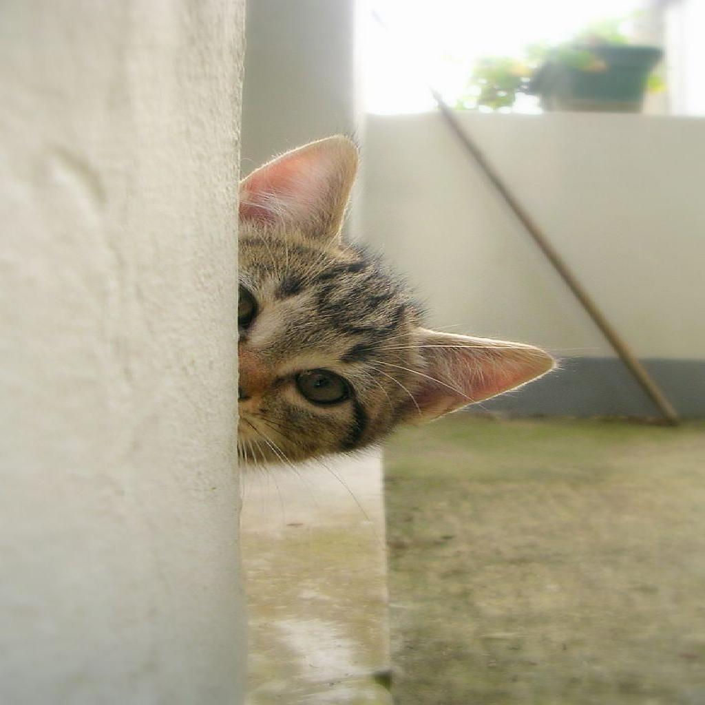 curiosidad o miedo