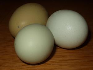 Matt Wharton Eggs