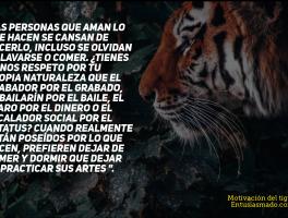 Motivación del tigre