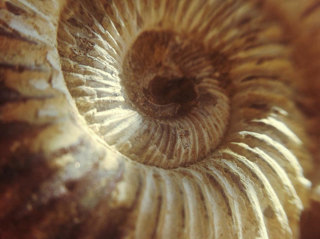 En la naturaleza muchas formas se rigen por la proporción aurea, y muchas relaciones causa efecto por el principio de Paretto.