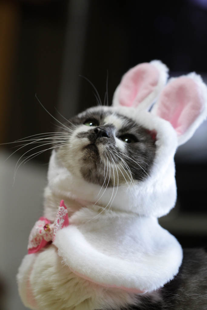 Decídete: ¿eres un gato o un conejo?