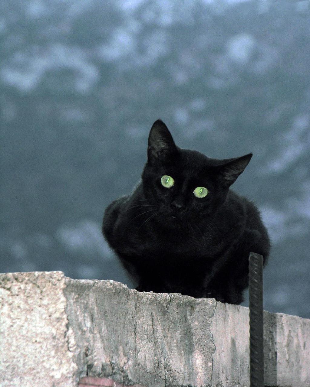 Mira que echarle la culpa de la mala suerte a un gato negro, con lo bonito que es.