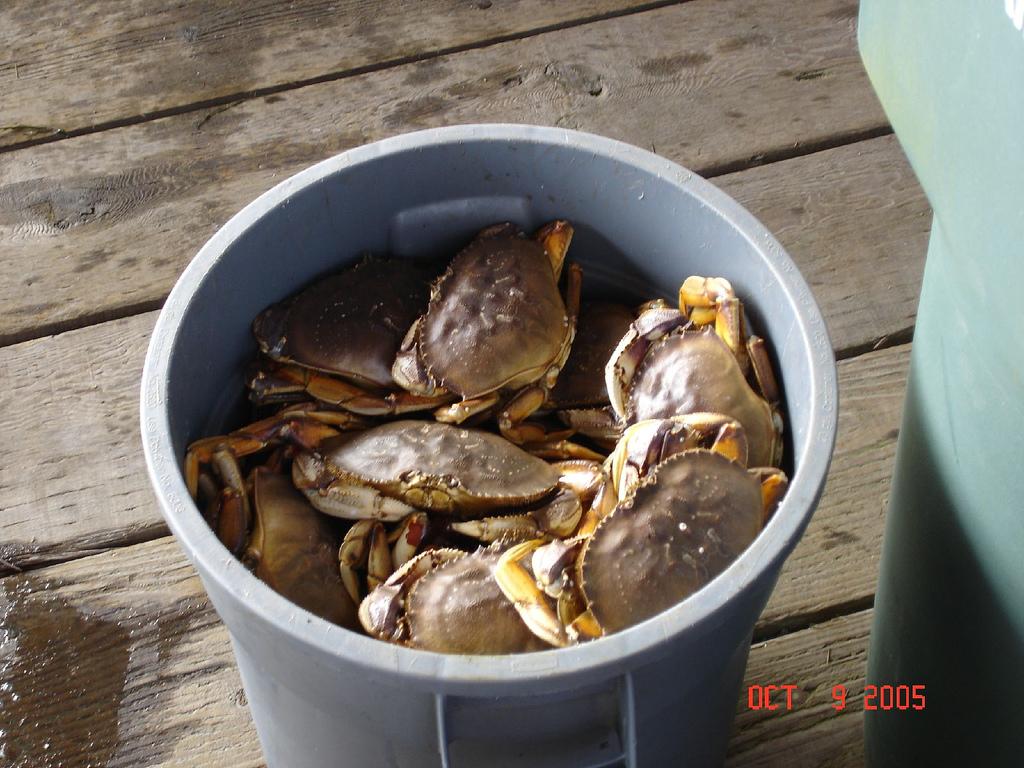 Síndrome del cubo de cangrejos
